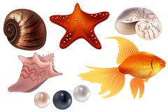 Realistic set with sea shells Royalty Free Stock Images