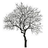 Realistic silhouette of tree. vector Royalty Free Stock Image
