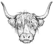 Realistic sketch of Scottish Cow, black and white drawing, vector isolated on white Royalty Free Stock Images