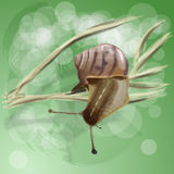 Realistic snail on a branch. Realistic snail on a dry branch. Vector illustration Stock Photo