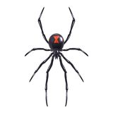 Realistic spider isolated Stock Image