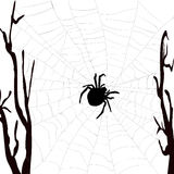 Realistic spider web with spider Royalty Free Stock Photo