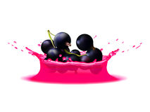Realistic splash of juice with black currant berries. Vector icon. Template for your design Royalty Free Stock Image
