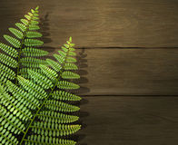 Realistic summer background with green fern leafs on wooden texture. Outdoor camping adventure. Design template. Stock Images