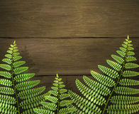 Realistic summer background with green fern leafs on wooden texture. Outdoor camping adventure. Design template. Stock Photography