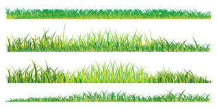 Realistic summer grass Royalty Free Stock Image