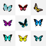 Realistic Summer Insect, Common Blue, Demophoon And Other Vector Elements. Set Of Beauty Realistic Symbols Also Includes. Realistic Summer Insect, Common Blue stock illustration