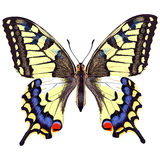 Realistic swallowtail butterfly. On a blank background Royalty Free Stock Images