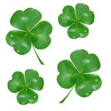 Realistic three-leaved shamrock. Symbol of St. Patrick`s Day royalty free illustration