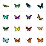 Realistic Tiger Swallowtail, Copper, Archippus And Other Vector Elements. Set Of Moth Realistic Symbols Also Includes. Realistic Tiger Swallowtail, Copper Stock Photo