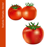 Realistic Tomato Royalty Free Stock Images