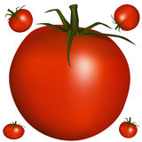 Realistic Tomato Stock Photo