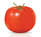 Realistic tomato in vector Royalty Free Stock Images