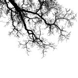 Realistic tree branches silhouette Vector illustration.Eps10 Stock Photo