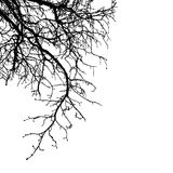 Realistic tree branches silhouette Vector illustration.Eps10 Stock Photography