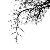 Realistic tree branches silhouette Vector illustration.Eps10 vector illustration