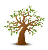 Realistic tree with green leaves on white Stock Photo