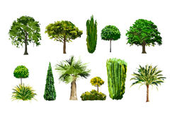 Realistic tree set Stock Photos