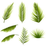 Realistic tropical green palm leaves set isolated on white background. Exotic jungle flora. Elements for your design Stock Images