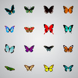 Realistic Tropical Moth, Archippus, Lexias And Other Vector Elements. Set Of Moth Realistic Symbols Also Includes Morpho vector illustration