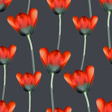 Realistic tulips seamless pattern Royalty Free Stock Photos