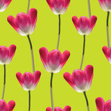 Realistic tulips vector seamless pattern Stock Images