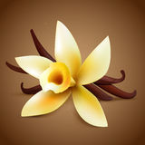 Realistic vanilla flower Royalty Free Stock Photos