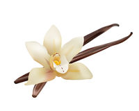 Realistic Vanilla Flower and Sticks. Vector Isolated Illustration Icon Stock Photo