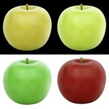 Realistic vector apple illustration in 4 colors. Vector Illustration