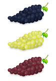 Realistic vector blue, green and red grapes bunch set on white background. Design template in EPS10. royalty free illustration