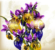 Realistic vector bouquet of  irises flowers Stock Photos