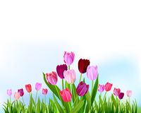 Floral Tulip spring banner Royalty Free Stock Image
