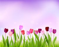 Sky Tulip spring banner Royalty Free Stock Photos