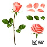 Realistic vector elements set of pink roses: petals, leaves, bud and an open flower. Realistic vector elements set of pink roses petals, leaves, bud and an open Stock Photography