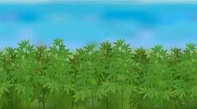 Horizontal seamless hemp field with the blue sky. Realistic vector hemp field in the harvesting time Stock Image