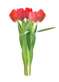 Realistic Vector Illustration Colorful Tulips . Not Trace. Pink Stock Photo