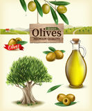 Realistic vector illustration of fruit olives, olive oil, olive branch, olive tree, olive farm. Label of green olives stock image