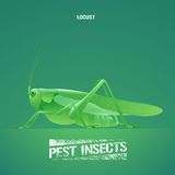 Realistic vector illustration of green insect Acrididae, locust, grasshopper Royalty Free Stock Photography