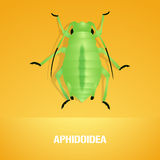 Realistic vector illustration of insect Aphidoidea, aphis Royalty Free Stock Image