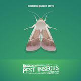 Realistic vector illustration of insect Noctuidae, common quaker moth Royalty Free Stock Photo