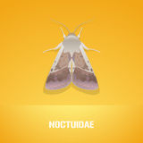 Realistic vector illustration of insect Noctuidae, common quaker moth Royalty Free Stock Images