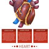 Realistic Vector Illustration Medical System Heart stock illustration
