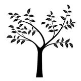 Realistic vector illustration of tree with branches and leaves, Stock Photography