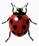 Realistic vector ladybug royalty free stock photos