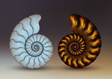 Realistic vector picture two fossil Ammonites Nacre and golden brown iridescent color on dark background. pearly, pure and airy. royalty free stock photos