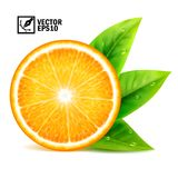 Realistic vector set of elements: slice of fresh orange with leaves and dew drops Editable handmade mesh. Realistic vector set of elements: slice of fresh orange Stock Photography