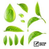 Realistic vector set of elements: tea leaves and dew drops or oi. Realistic vector set of elements tea leaves and dew drops or oil Royalty Free Stock Photo