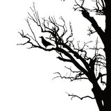 Realistic vector silhouette of sitting raven on dry tree branch. Isolated on white background Stock Images