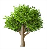 Realistic vector tree with leaves. Plant with green foliage. Forest nature and ecology Royalty Free Stock Photography