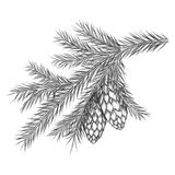 Realistic vintage engraving wreath of fir branches and pine cones, beads  on white background. Christmas, New Royalty Free Stock Image